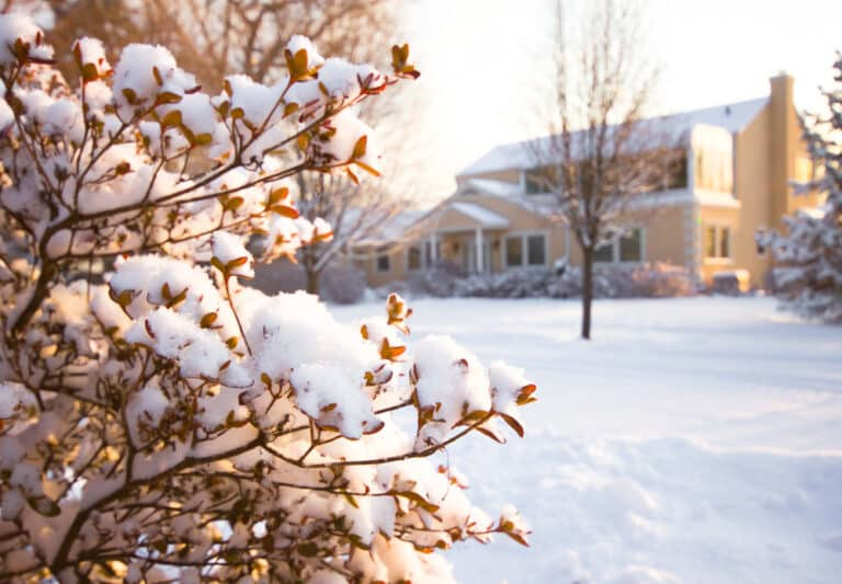 Snow-covered bush, snow-covered house in background